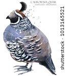 Quail Bird Watercolor...