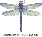 Stock vector dragonfly wild nature butterfly 1013165539
