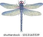 animal dragonfly wild nature   Shutterstock .eps vector #1013165539