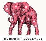 beautiful pink elephant | Shutterstock .eps vector #1013174791