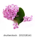 flower lilac isolated on white... | Shutterstock . vector #101318161
