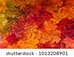autumn leaf on old white... | Shutterstock . vector #1013208901