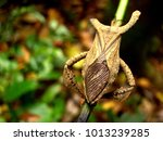 Amazing Brown Stink Bug With...