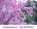 pink plower plant    Shutterstock . vector #1013269411