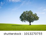alone tree on green meadow over ... | Shutterstock . vector #1013270755