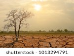 dried and cracked ground... | Shutterstock . vector #1013294791