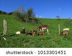 goat  donkey  sheep  swabian... | Shutterstock . vector #1013301451