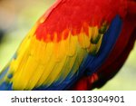 Feather Vivid Color Of The...