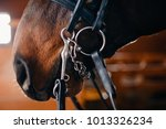 close up detail nose of brown... | Shutterstock . vector #1013326234