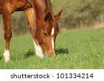 Horse In Spring Pasture