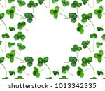 Green clover  the symbol of the ...