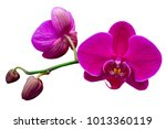 Pink purple yellow phalaenopsis ...
