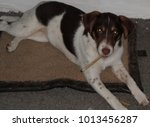 chew smoking puppy  | Shutterstock . vector #1013456287