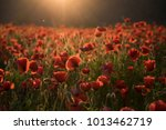 the remembrance poppy   poppy... | Shutterstock . vector #1013462719