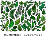 set of doodle vector leaves and ... | Shutterstock .eps vector #1013474314