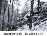 photo of a beautiful coniferous ... | Shutterstock . vector #1013556049