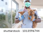 veterinarian and cute pets... | Shutterstock . vector #1013596744