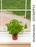 Indoor herbs garden - stock photo