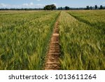 field of wheat australia  some... | Shutterstock . vector #1013611264