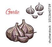 garlic seasoning spice herb... | Shutterstock .eps vector #1013640739