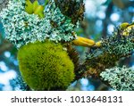 lichens at the top of the... | Shutterstock . vector #1013648131