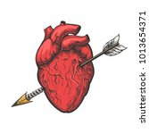 human heart with arrow drawing. ... | Shutterstock .eps vector #1013654371