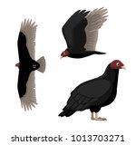 Turkey Vulture Cartoon Poses...