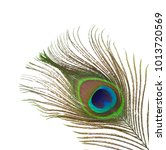 peacock feather isolated on... | Shutterstock . vector #1013720569