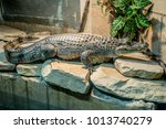 Small photo of The Nile crocodile is an African crocodile, the largest freshwater predator in Africa, and the second largest reptile in the world, after the saltwater crocodile.