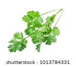 cutout of fresh coriander ... | Shutterstock . vector #1013784331