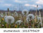 soft nature background with... | Shutterstock . vector #1013795629