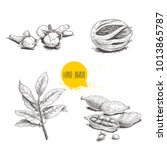 hand drawn sketch spices set....   Shutterstock .eps vector #1013865787