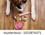 dogs paws and neb and heap of... | Shutterstock . vector #1013876371