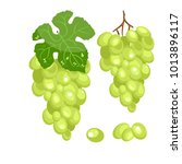 vector bunch of green grapes on ... | Shutterstock .eps vector #1013896117