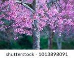 pink flower background    Shutterstock . vector #1013898091
