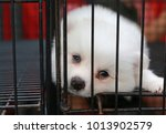 Stock photo puppies inside a cage on display for sale 1013902579