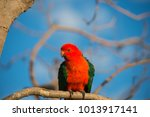 Small photo of Male king parrot