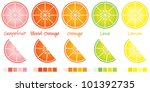 citrus slices and wedges in... | Shutterstock .eps vector #101392735