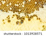 nest of apis florea consists an ... | Shutterstock . vector #1013928571