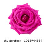 Stock photo pink rose isolate on white background 1013944954