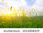 mountain landscape with the sun | Shutterstock . vector #1014008329
