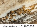 bees flying back in hive after... | Shutterstock . vector #1014009655