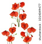 three bunches of red poppy...   Shutterstock . vector #1014049477