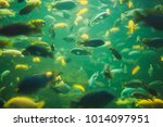 Close Up View Of A School Of...