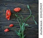 red poppy flowers on black...   Shutterstock . vector #1014125419