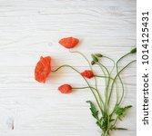 red poppy flowers on white...   Shutterstock . vector #1014125431