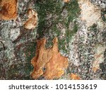 tree trunk zoom in texture for... | Shutterstock . vector #1014153619