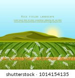 rice fields landscape vector.... | Shutterstock .eps vector #1014154135