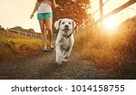 walk a young woman with dog at... | Shutterstock . vector #1014158755