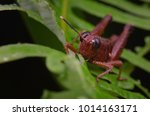 macro image of a brown... | Shutterstock . vector #1014163171